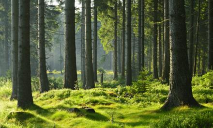 'Floresta de Trump' quer compensar o retrocesso da política climática dos EUA