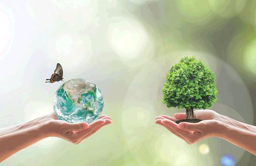 Promover a biodiversidade nas cidades