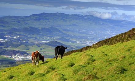 Smart Island, a visão da Vodafone para os Açores