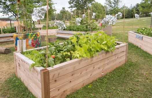Agricultura urbana precisa de uma nova abordagem, diz estudo