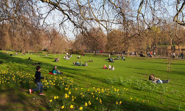 Proteger e promover a biodiversidade nas cidades