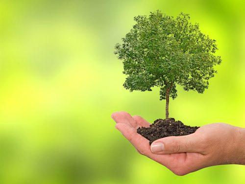 Calculadoras de pegada ecológica chegam a seis municípios nacionais