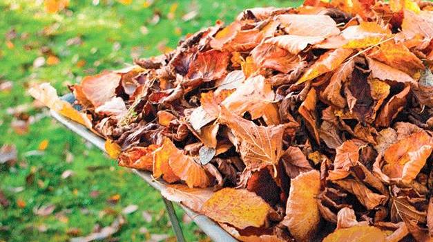 Póvoa do Varzim vai transformar resíduos verdes em adubo natural