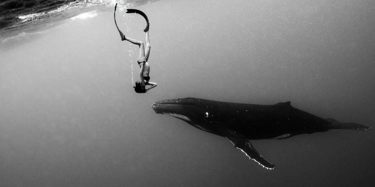 Açores recebem a 1ª edição do Ocean Talks