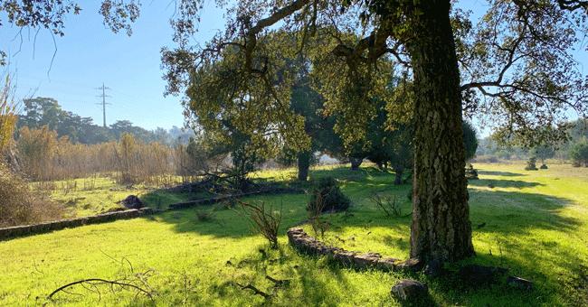 Plataforma de reflorestação avisa que é necessário plantar 4 mil milhões de árvores por ano para compensar perdas da última década