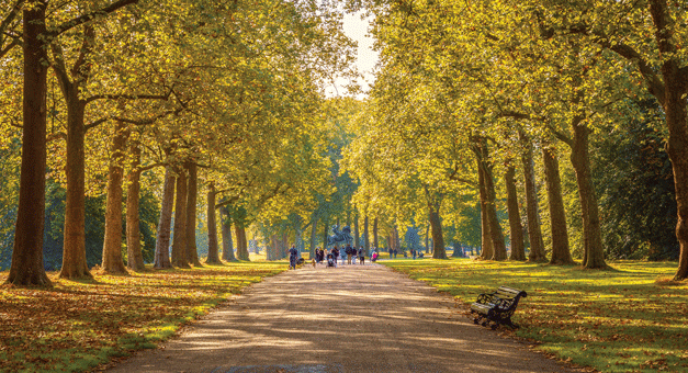 Espaços verdes urbanos:  uma ferramenta para a construção das cidades do futuro