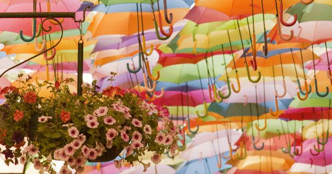 Águeda lança app para visitas virtuais aos guarda-chuvas coloridos da cidade