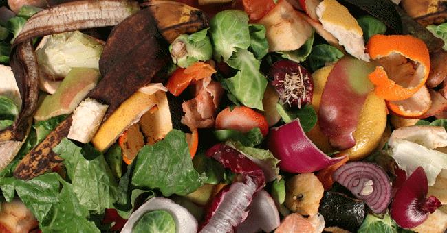 Grande Porto participa em projecto europeu que pretende criar produtos biológicos a partir de resíduos orgânicos