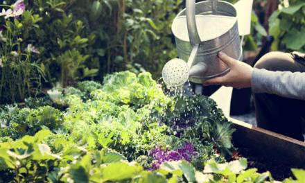 Ferramenta combina energia, água e alimentos para ajudar na definição de estratégias urbanas de sustentabilidade