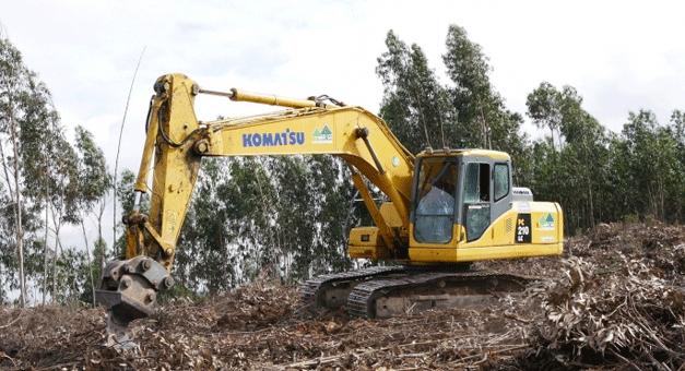 Reconversão de terrenos municipais com plantação de espécies autóctones