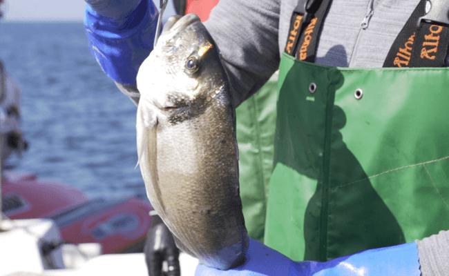 Do mar ao prato, projecto leva o pescado a casa e usa a tecnologia para mostrar o trajecto