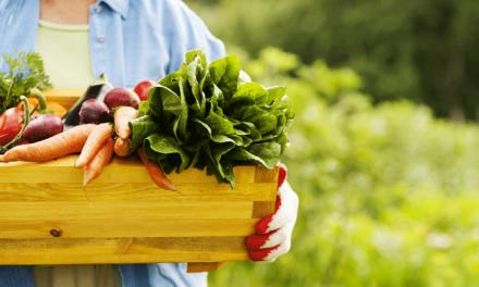 Mértola e Torres Vedras comprometem-se com políticas alimentares mais sustentáveis