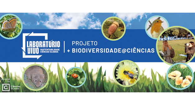 Projecto convida comunidade a monitorizar a biodiversidade no campus da FCUL (e não só)