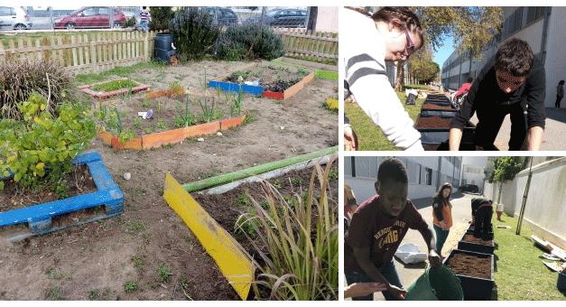 Hortas nas Escolas: aprender sobre sustentabilidade e meio ambiente desde pequeno