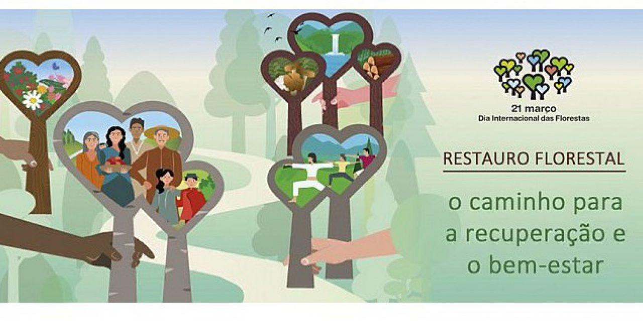 A Primavera está a chegar e ICNF tem 50 mil árvores para dar